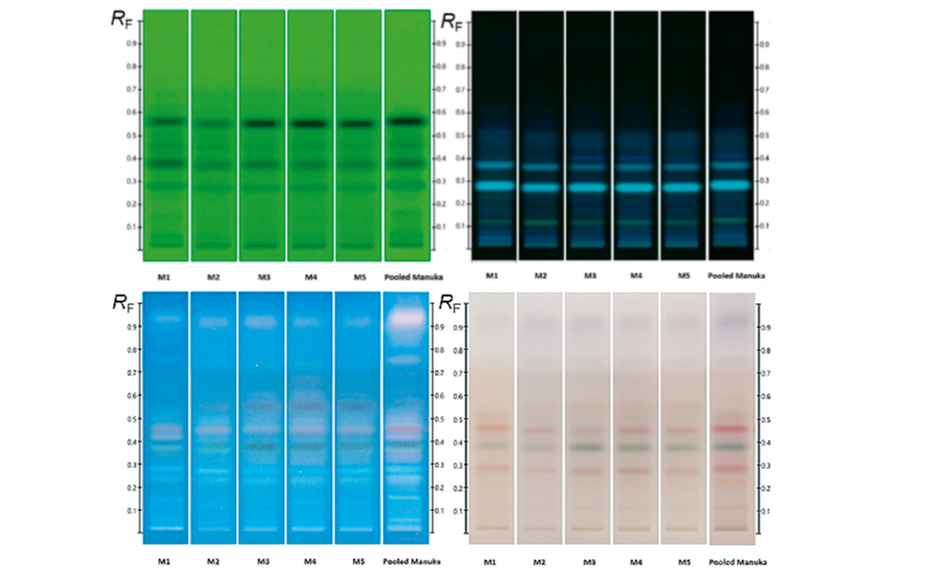 HPTLC fingerprints of several Manuka samples along with pooled sample; (from left to right) images at UV 254 nm, UV 366 nm after development and UV 366 nm and white light after derivatization