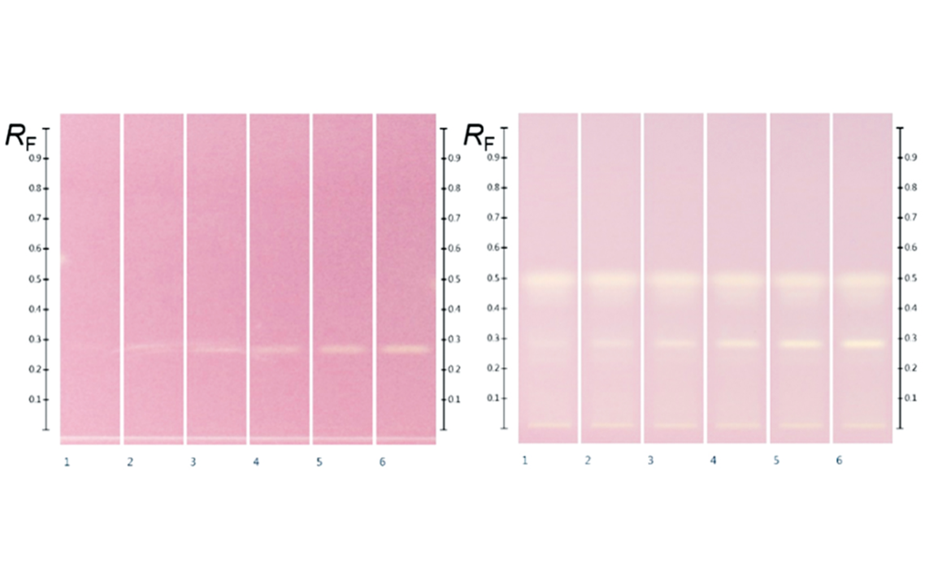 HPTLC chromatograms at white light after DPPH; (left) gallic acid (RF 0.29) 2.0, 3.0, 4.0, 5.0, 6.0, and 7.0 μL of the standard solution in methanol; (right) Manuka extracts (5 μL) overspotted with gallic acid 2.0, 3.0, 4.0, 5.0, 6.0, and 7.0 μL respectively